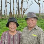 与那国島の長生草®のお茶は「東迎薬草園」
